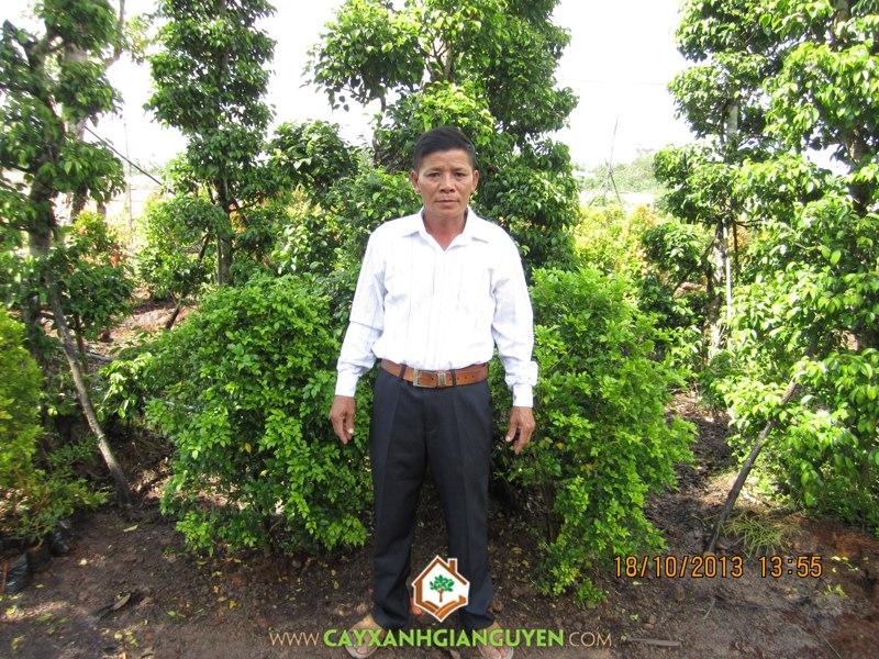 cây lâm nghiệp, cây công nghiệp, đồn điền cao su, Bình Phước, vàng trắng-mủ cao su