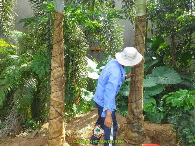 Cung cấp cây lâm nghiệp cho khách hàng.
