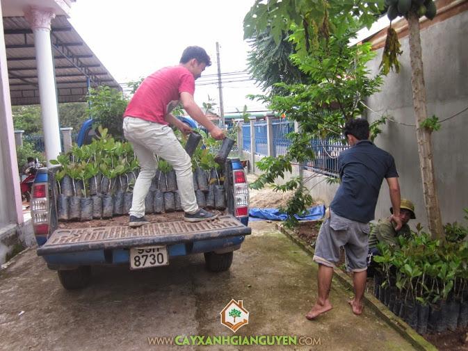 Cung cấp cây giống lâm nghiệp cho khách hàng.