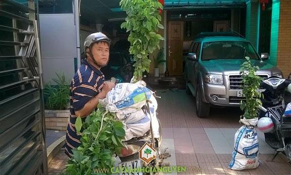 cây xanh Gia Nguyễn, cây giống, cây lâm nghiệp, cây giống lâm nghiệp, vườn ươm cây xanh Gia Nguyễn, cung cấp cây giống