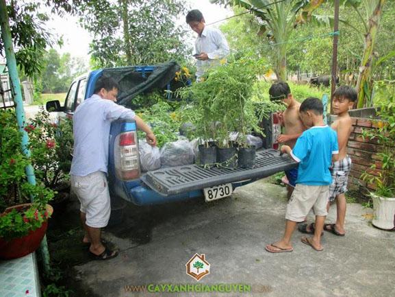 cây xanh Gia Nguyễn, cung cấp cây giống, cây sưa đỏ, cây giống lâm nghiệp, vườn ươm cây xanh Gia Nguyễn