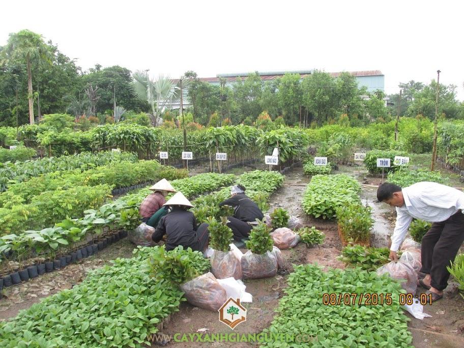 Vườn ươm Cây Giống Lâm Nghiệp của Cây Xanh Gia Nguyễn