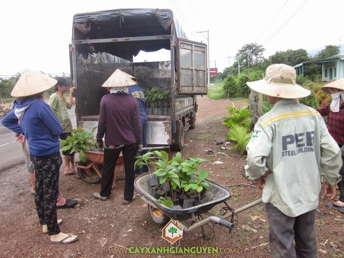 Khách hàng mua cây giống Cây Xanh Gia Nguyễn