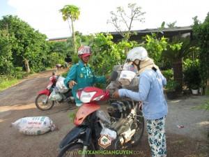 Cây xanh Gia Nguyễn, Cây gáo vàng, Lát hoa, Dái ngựa, Cẩm lai