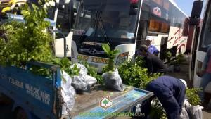 Công ty cây xanh Gia Nguyễn, Cây giáng hương, Cây cẩm lai, Cây gỗ trắc, Cây dái ngựa