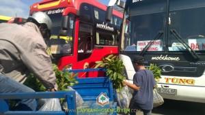Công ty cây xanh Gia Nguyễn, Cây vối, Cây giống, Cây gáo vàng, Cây bơ sáp da xanh