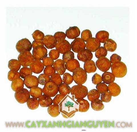 Cây Giá Tỵ, Hạt giống, Cách ươm trồng hạt cây Giá Tỵ, Chăm sóc luống gieo, Cây con