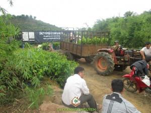 Cây Xanh Gia Nguyễn, Cây Điều Cao Sản Ấn Độ, Cây Điều Thái Lan, Cây Sao Đen, Giống Điều