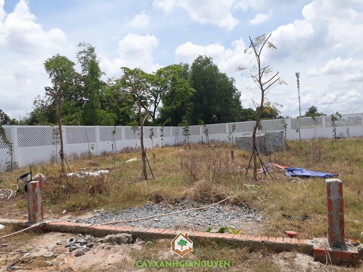 Vườn ươm Cây Xanh Gia Nguyễn, Cây giống, Ổi Lê Đài Loan, Cây Vú Sữa Lò Rèn, Cây Giáng Hương