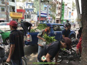Vườn ươm Cây Xanh Gia Nguyễn, Cây keo lai, Cây keo lai giống, Cây giống, Keo Lai