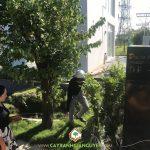CÂY XANH GIA NGUYỄN CUNG CẤP 110 CÂY VỐI BẮC CHO CHỊ LÝ Ở HUYỆN NHÀ BÈ, TPHCM