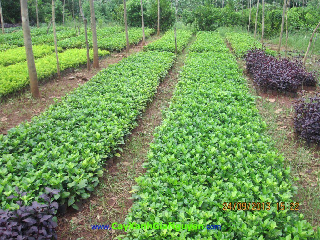 cây xanh, vì lợi ích 10 năm trồng cây, TRỒNG CÂY,
